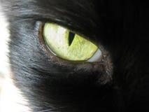 Ljust gult citron-färgat se för kattöga rakt arkivbilder