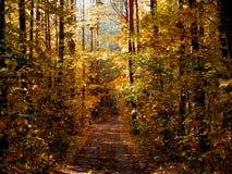 Ljust höstlandskap, väg i skogen arkivfoto