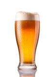 Ljust kallt öl i frostigt exponeringsglas som isoleras på vit royaltyfria bilder