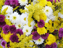 Ljust kulört blomma för blomma Arkivfoto