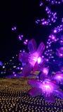 Ljust lågt ljus för lampa Fotografering för Bildbyråer