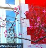 Ljust målad byggnad med rosa blomningfilialer arkivbilder