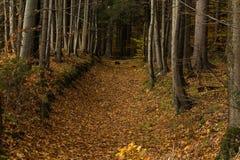 Ljust - naturlig gångbana för grön skog i ljus för solig dag Royaltyfri Foto
