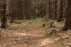 Ljust - naturlig gångbana för grön skog i ljus för solig dag Solskenskogträd Fotografering för Bildbyråer