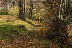 Ljust - naturlig gångbana för grön skog i ljus för solig dag Solskenskogträd Sol till och med skog för skog för livlig gräsplan f Royaltyfria Bilder