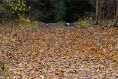 Ljust - naturlig gångbana för grön skog i ljus för solig dag Solskenskogträd Sol till och med skog för skog för livlig gräsplan f Royaltyfri Fotografi