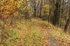 Ljust - naturlig gångbana för grön skog i ljus för solig dag Solskenskogträd Sol till och med skog för skog för livlig gräsplan f Arkivfoto