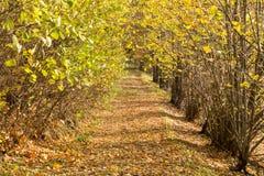 Ljust - naturlig gångbana för grön skog i ljus för solig dag Solskenskogträd Sol till och med skog för skog för livlig gräsplan f Royaltyfria Foton