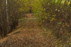 Ljust - naturlig gångbana för grön skog i ljus för solig dag Solskenskogträd Sol till och med skog för skog för livlig gräsplan f Fotografering för Bildbyråer