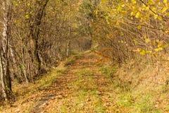 Ljust - naturlig gångbana för grön skog i ljus för solig dag Solskenskogträd Sol till och med skog för skog för livlig gräsplan f Royaltyfri Bild