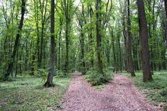 Ljust - naturlig gångbana för grön skog i ljus för solig dag Solskenskogträd Arkivfoto