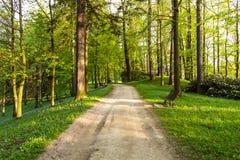 Ljust - naturlig gångbana för grön skog i ljus för solig dag Solskenskogträd Sol till och med skog för livlig gräsplan Royaltyfri Fotografi