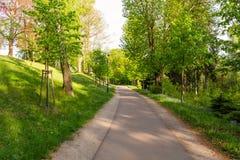 Ljust - naturlig gångbana för grön skog i ljus för solig dag Solskenskogträd Sol till och med skog för livlig gräsplan Royaltyfri Bild