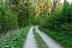 Ljust - naturlig gångbana för grön skog i ljus för solig dag Solskenskogträd Sol till och med skog för livlig gräsplan Arkivfoto