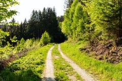 Ljust - naturlig gångbana för grön skog i ljus för solig dag Solskenskogträd Sol till och med skog för livlig gräsplan Arkivbild