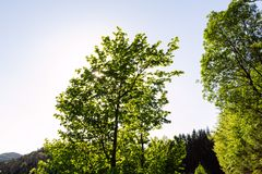 Ljust - naturlig gångbana för grön skog i ljus för solig dag Solskenskogträd Sol till och med skog för livlig gräsplan Royaltyfria Bilder