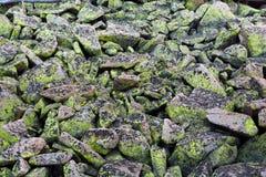 Ljust och mörkt - gröna Moss Lichen Fungus Covered Rocks Royaltyfri Fotografi