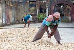 Ljust rödbrun arbetare i fortet Cochin, Indien Royaltyfri Fotografi