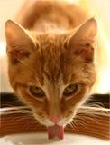 Ljust rödbrun katt Royaltyfri Bild