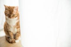 Ljust rödbrun katt Arkivfoto