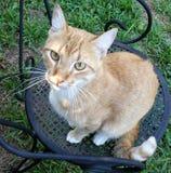 Ljust rödbrun katt i en järnstol Fotografering för Bildbyråer