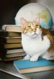 Ljust rödbrun katt med gamla böcker och jordklotet, bibliotekariekatt, utbildning Royaltyfri Bild