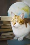 Ljust rödbrun katt med gamla böcker och jordklotet, bibliotekariekatt, utbildning Fotografering för Bildbyråer