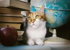 Ljust rödbrun katt med gamla böcker och skolajordklotet, bibliotekariekatt, utbildning Royaltyfri Fotografi