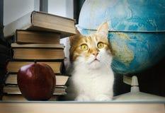 Ljust rödbrun katt med gamla böcker och skolajordklotet, bibliotekariekatt, utbildning Arkivbilder