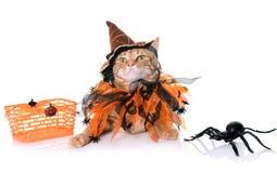 Ljust rödbrun katt och halloween Arkivfoto