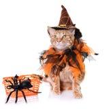 Ljust rödbrun katt och halloween Royaltyfria Bilder