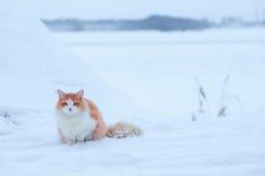 Ljust rödbrun katt på snöbakgrund Royaltyfri Fotografi