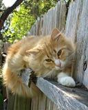 Ljust rödbrun katt på staketet Royaltyfri Foto