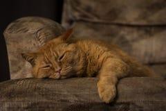 Ljust rödbrun katt som är snabb sovande på möblemang royaltyfri fotografi