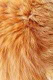 Ljust rödbrun kattpäls Arkivbild