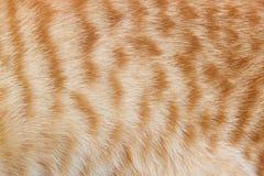Ljust rödbrun kattpäls för textur eller bakgrunder Royaltyfria Bilder