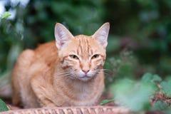 Ljust rödbrun kattsammanträde på jordningen i trädgården Arkivbilder