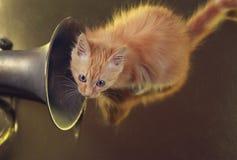 Ljust rödbrun kattunge med valthornet royaltyfri fotografi