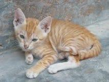 Ljust rödbrun kattunge som utomhus vilar royaltyfria bilder