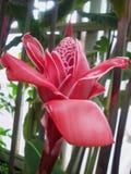 ljust rödbrun röd fackla Royaltyfri Foto