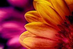 Ljust rött, ros, gulingblommor Royaltyfri Fotografi