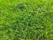 Ljust saftigt grönt änggräs på en solig sommardag Royaltyfri Bild