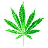 Ljust - sativa blad för grön cannabis som målas i vattenfärg Räcka den utdragna marijuanaillustrationen som isoleras på vit bakgr royaltyfri illustrationer