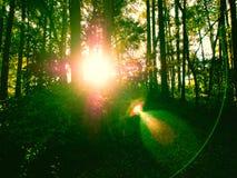 Ljust skina för sol till och med de gröna träna Royaltyfria Foton