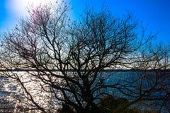 Ljust solsken och ett träd på vintern Royaltyfria Bilder