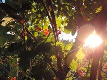 Ljust solsken och växt i trädgården Arkivfoton
