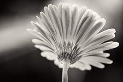 Ljust svartvitt för morgon Royaltyfri Fotografi