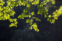 Ljust - tapet för gräsplansidabakgrund Arkivfoton