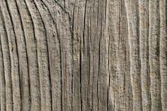 ljust texturträ abstrakt bakgrund Fotografering för Bildbyråer