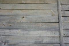 ljust trä för bakgrund royaltyfri foto